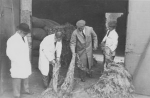 Image of Four workers inspecting jute DUNIH 106.17