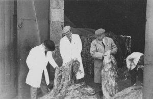 Image of Four workers inspecting jute DUNIH 106.18