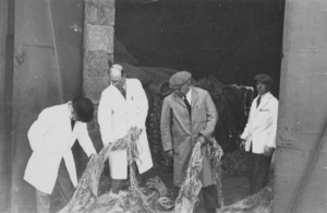 Image of Four workers inspecting jute DUNIH 106.19