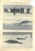 Newspaper cutting showing different images of the Antarctic expedition 1901-4 thumbnail DUNIH 2016.30.45.10