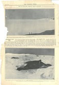 Image of Newspaper cutting showing different images of the Antarctic expedition 1901-4 DUNIH 2016.30.45.9