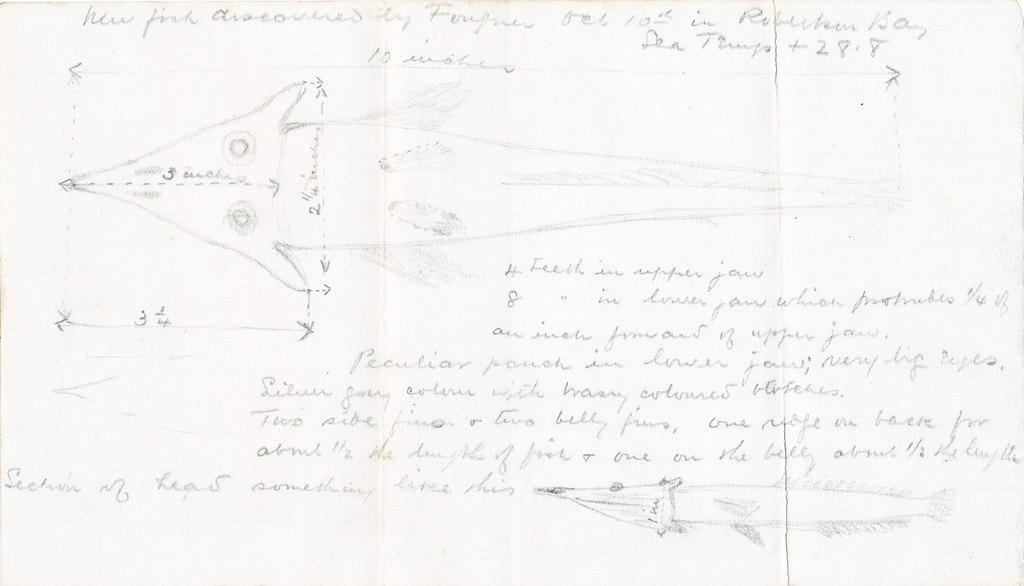 Fish specimen DUNIH 1.018