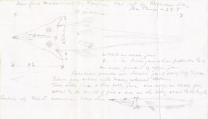 Image of Fish specimen DUNIH 1.018