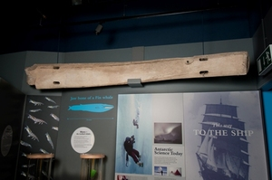 Image of Jaw bone of a fin whale DUNIH 2009.68
