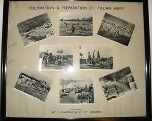 Image of Cultivation and preparation of Italian hemp DUNIH 46.8